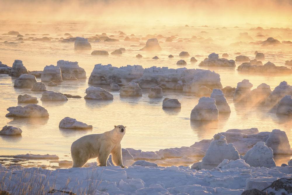 Polar bear in sea ice mist. Photo by Rick Beldegreen.