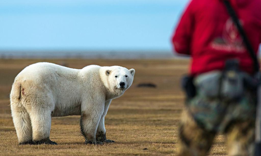 Become a Certified Polar Bear Whisperer