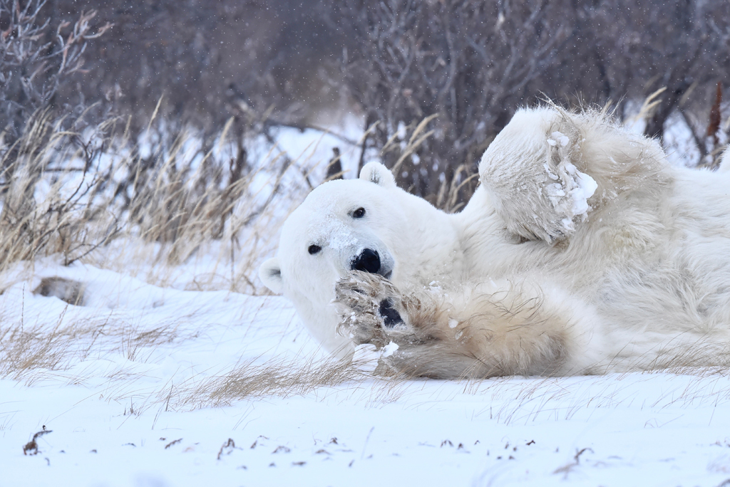 This polar bear wanted to play!