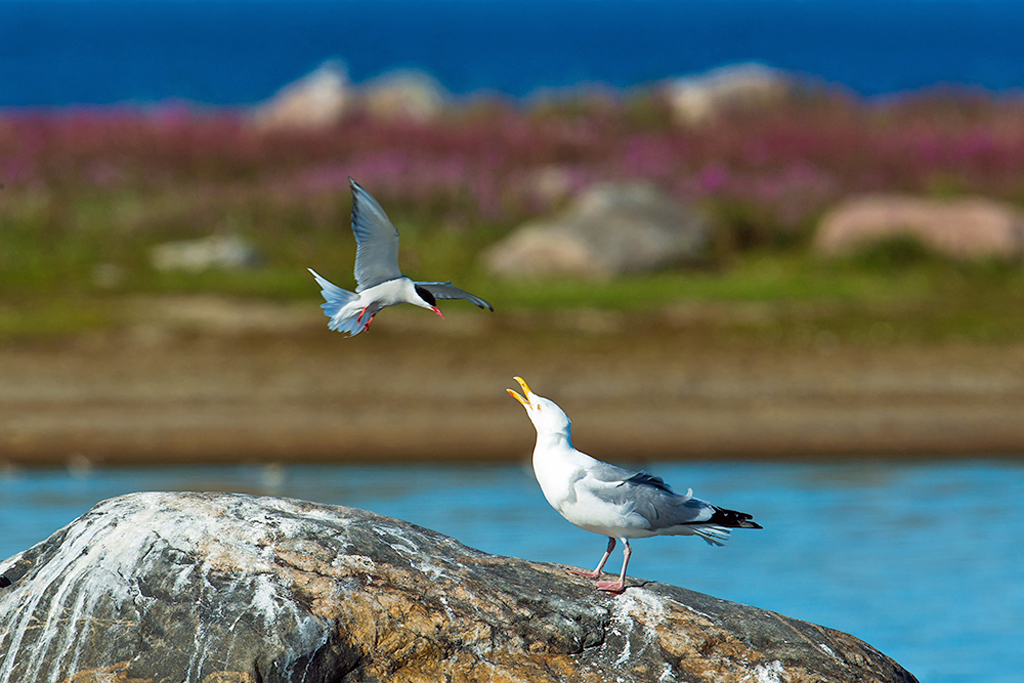 Year of The Bird alive and thriving at Churchill Wild