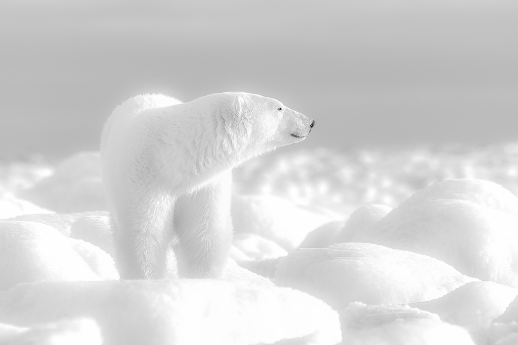 When is the best time to see polar bears?