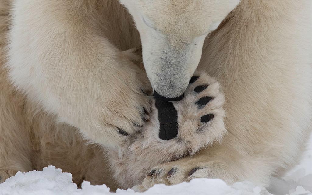 He has his own gloves. Charles Glatzer photo.