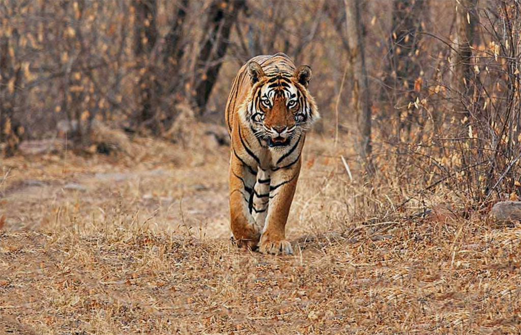 From India to Canada, from tigers to polar bears, conservation and luxury know no bounds