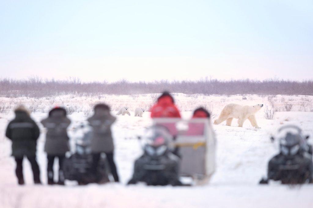 polar bear mom and cubs. Den Emergence Quest. Ruth Elwell-Steck photo