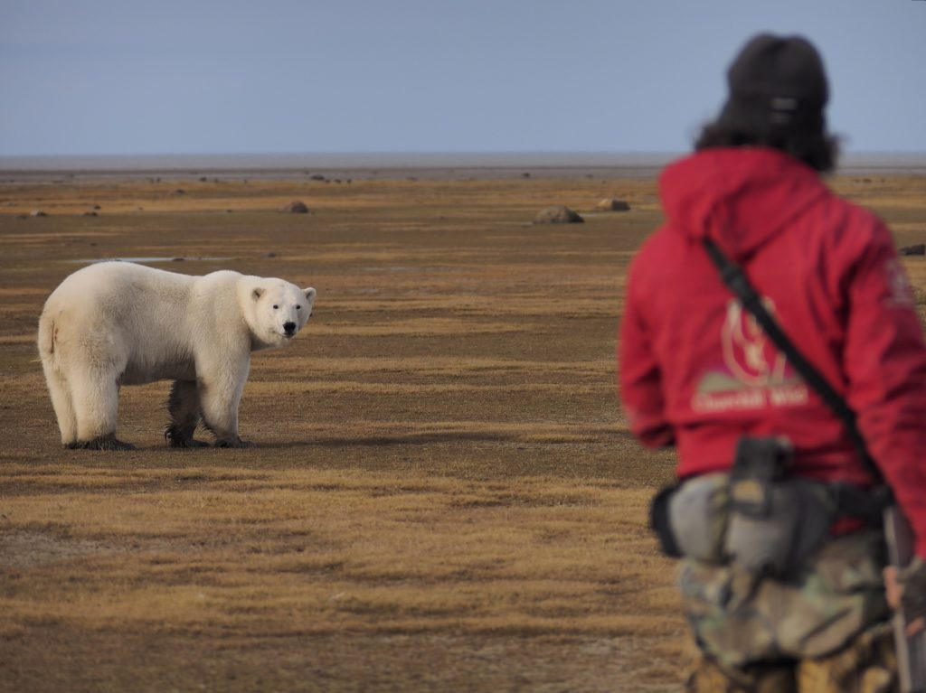 Churchill wild guide with polar bear. Laurence Lee photo.