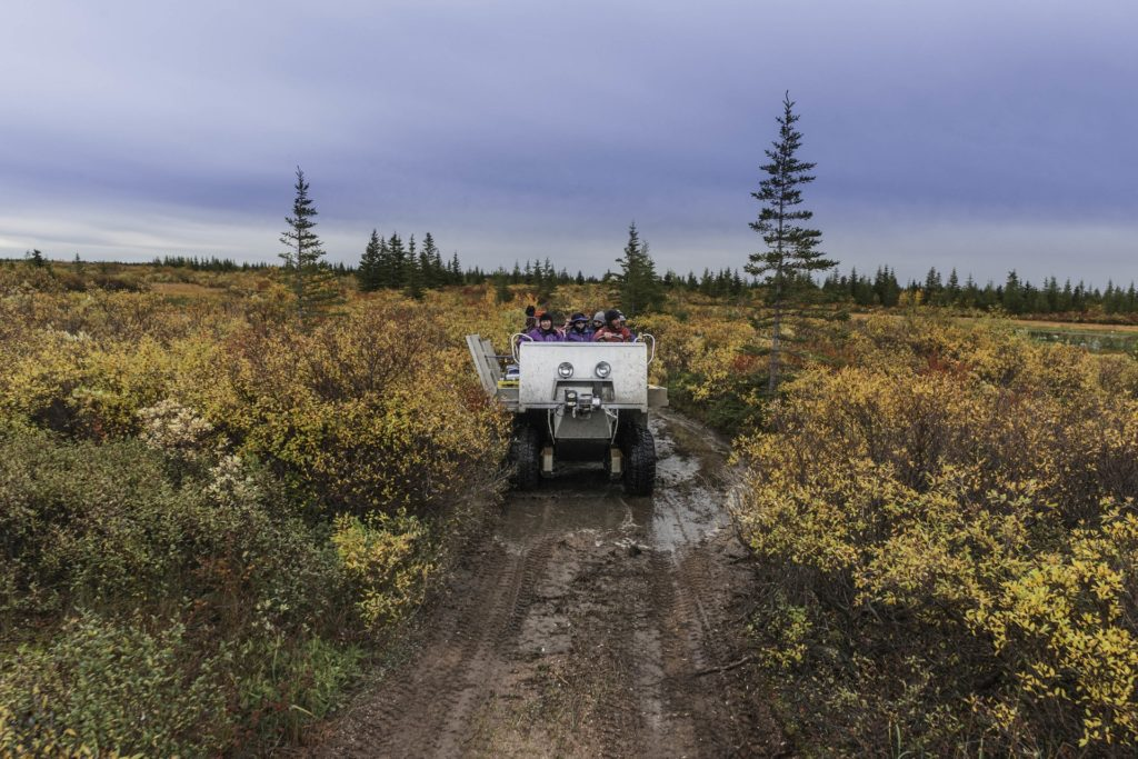 Tundra rhino. Nanuk Polar Bear Lodge. Jad Davenport photo.
